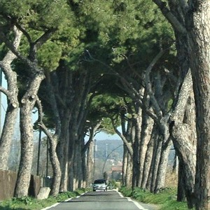 Tree-lined road in Italy