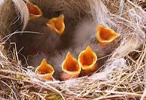 Küken im Nest - neues Leben